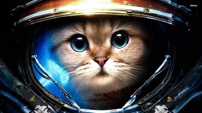 Cat Warrior.jpg