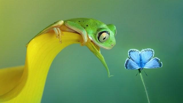 Curious Frog.jpg