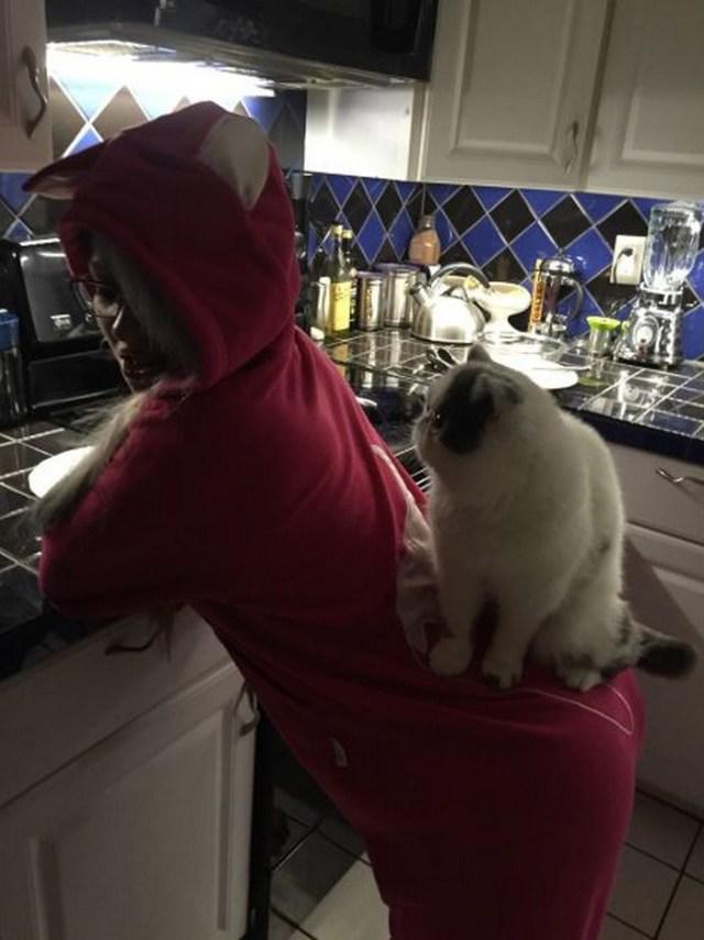 Butt Cat Shelf.jpg
