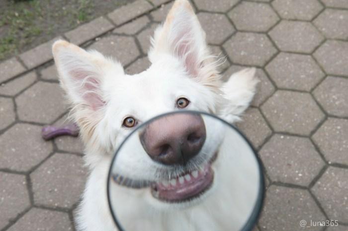 Dog Mouth.jpg
