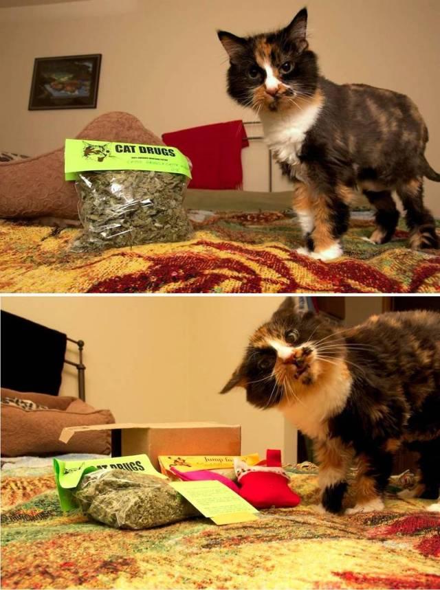 Cat Drugs.jpg