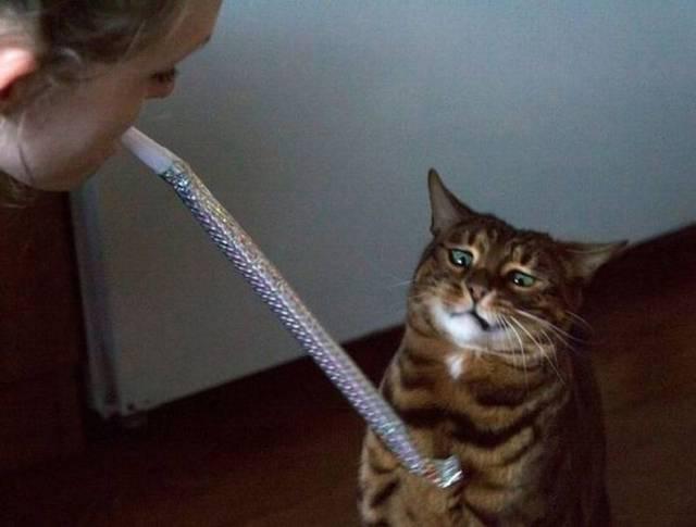 WTF Cat.jpg