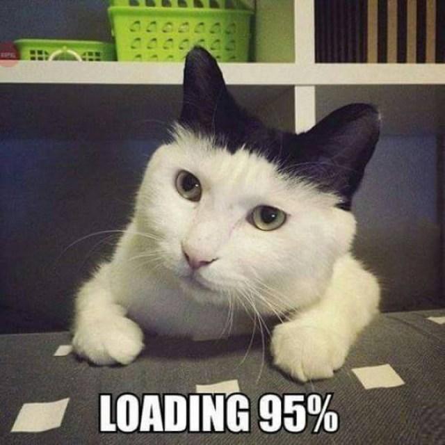 Loading Cat.jpg