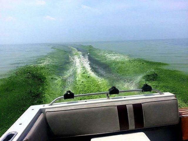green ocean.jpg