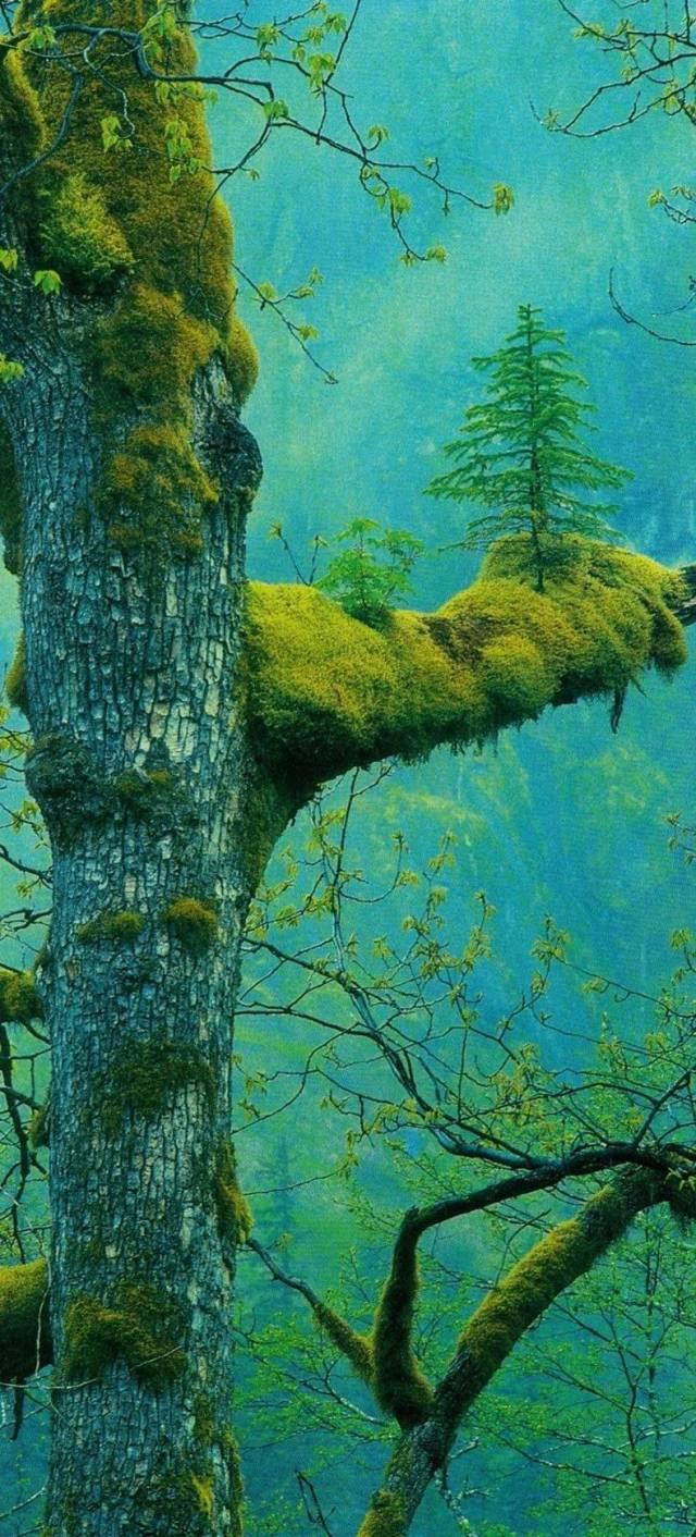 tree growing on a tree.jpg