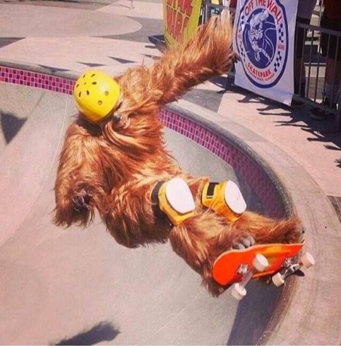 wookie on a skate board.jpg