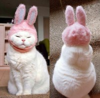 Bunny Cat.jpg