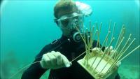 underwater basket weaving.jpg