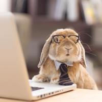 business bunny.jpg