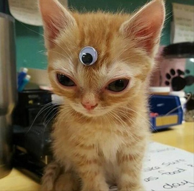 Third Eye Cat.jpg