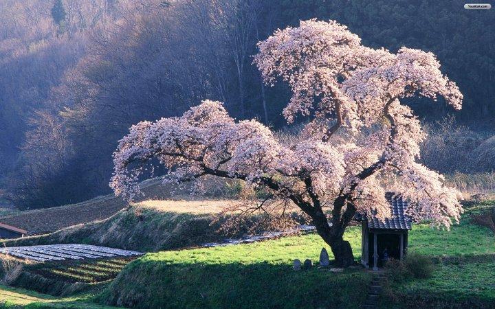 Blossoming Tree.jpg
