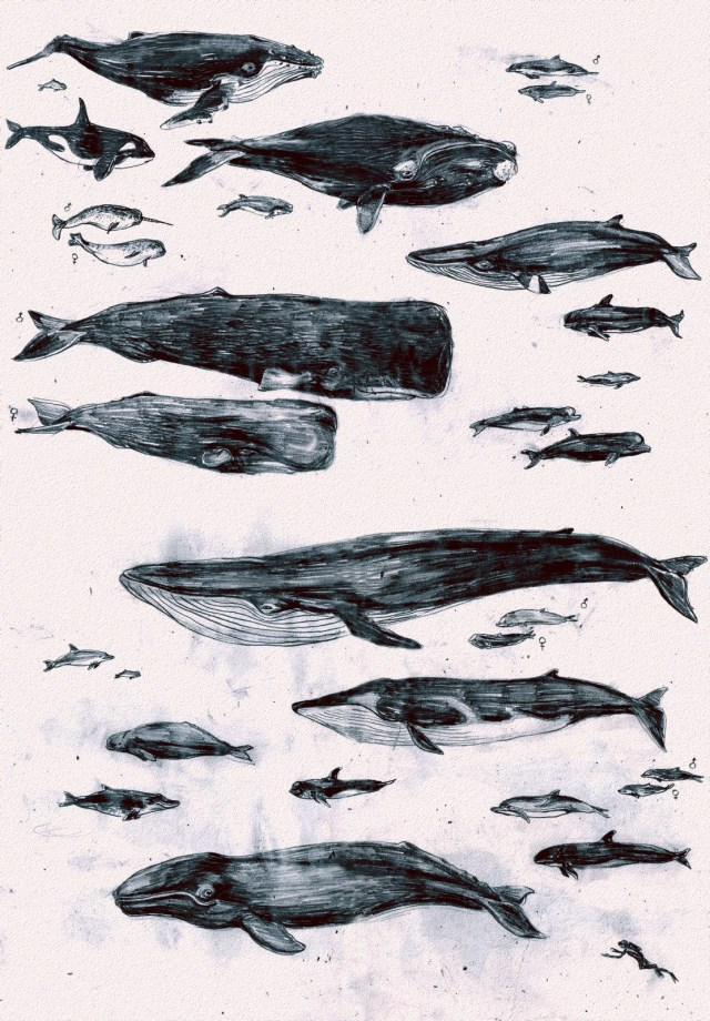 whales of the world.jpg