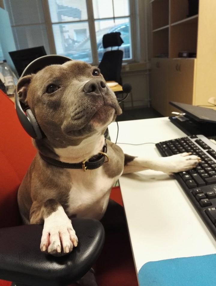 Doggy Tech Support.jpg