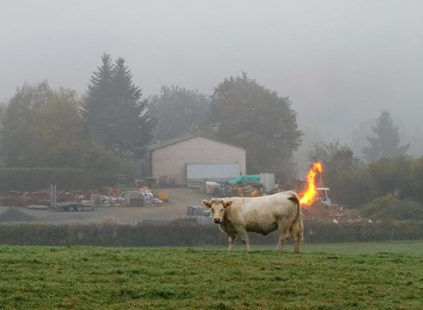 cow-daily-wtf-012-11062013