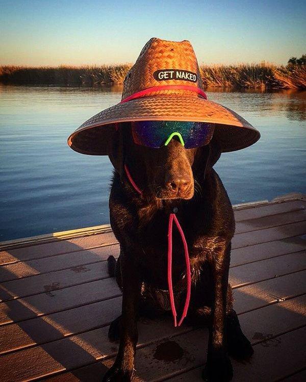 Get Naked Dog Hat.jpg