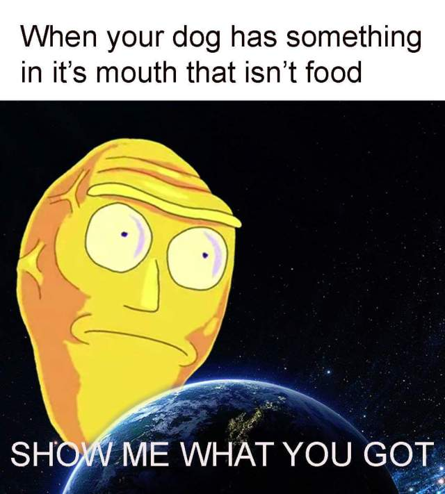 when your dog has something in it's mouth.jpg