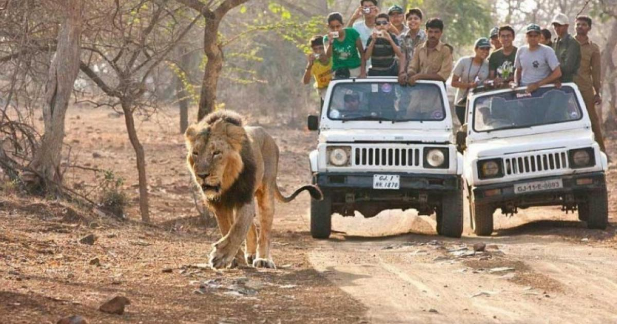 Church Leader Mauled By Lion After Trying To Prove God Would Intervene