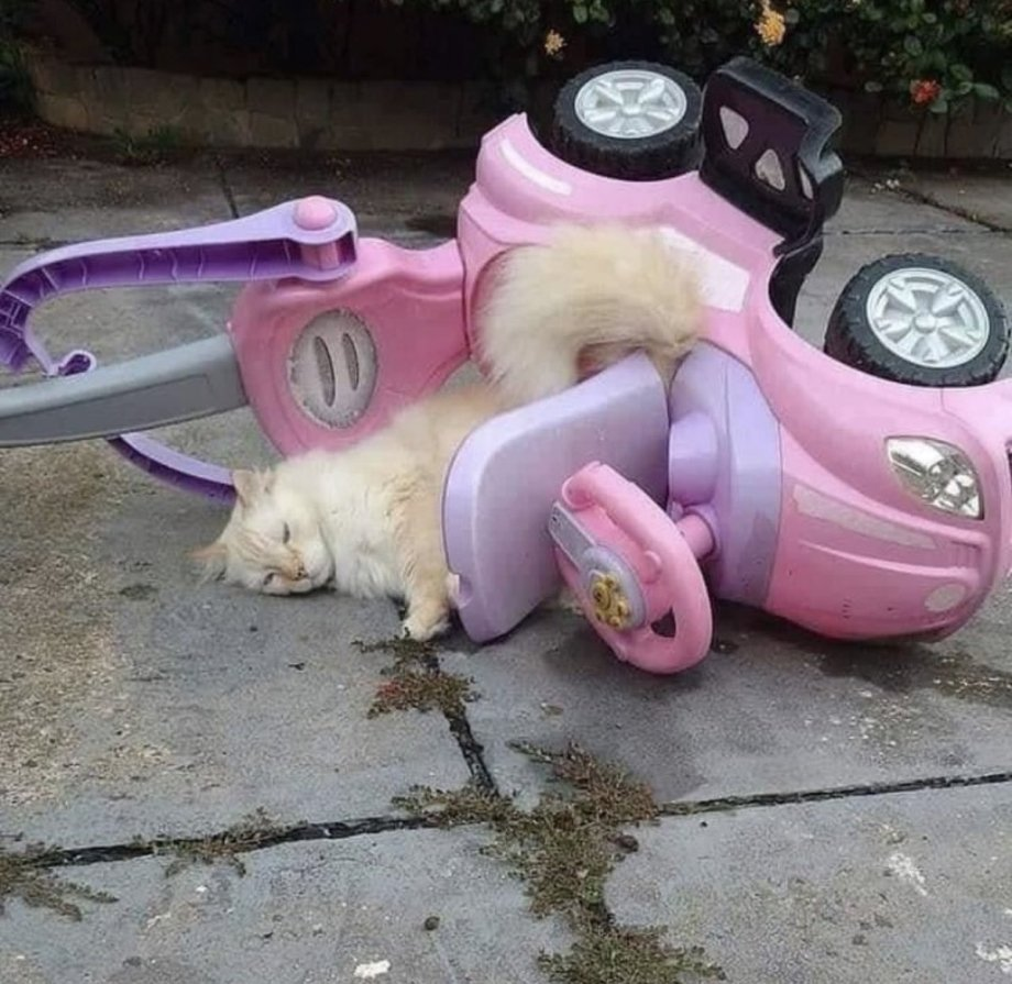 kitty accident