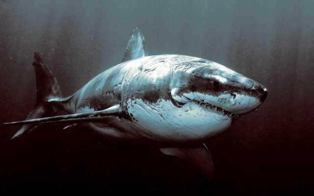 shark-that-does-not-fuck-around.jpg (136 KB)