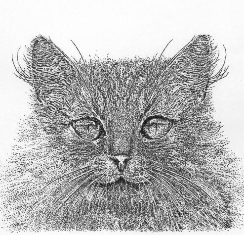 cat_c.jpg (225 KB)