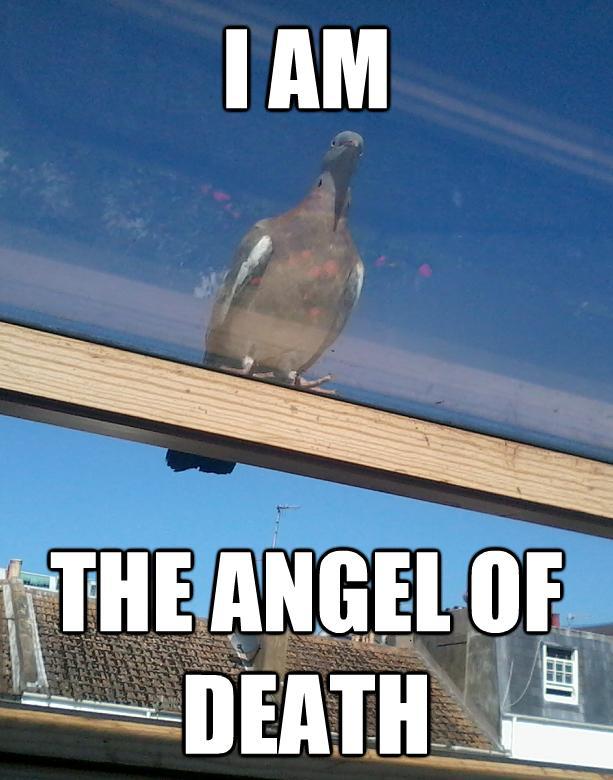 angry_god_pigeon_1.JPG (62 KB)