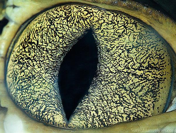 cainman-close-up-of-eye-macro-suren-manvelyan.jpg (161 KB)