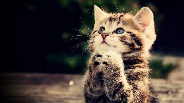 kitten-asking-please.jpg (196 KB)