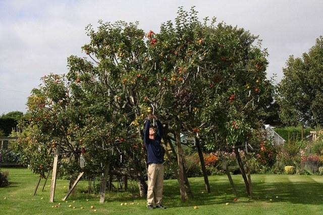apple1.jpg (275 KB)