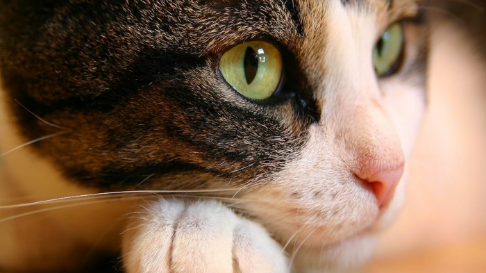 cat-eyes.jpg (605 KB)