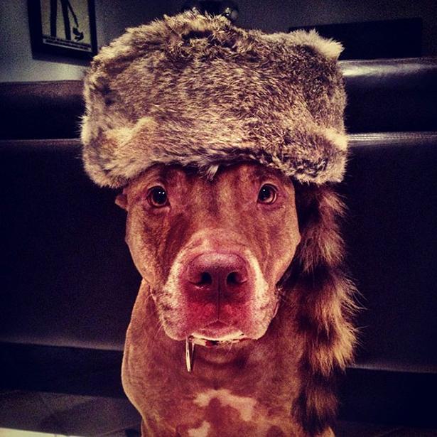 dog-daily-wtf-036-11262013.jpg (324 KB)