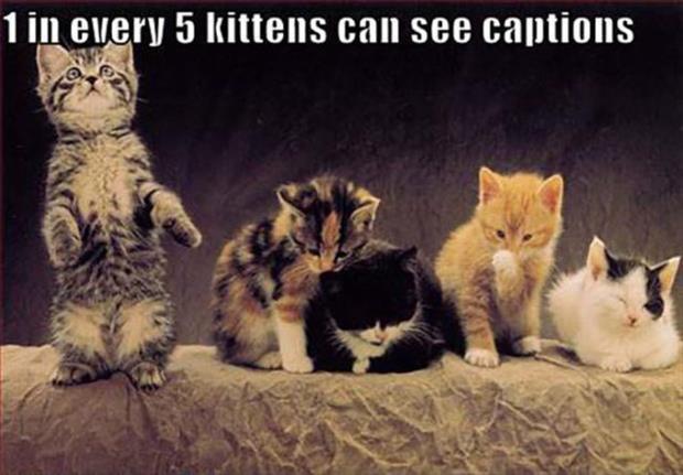 kittens-see.jpg (40 KB)