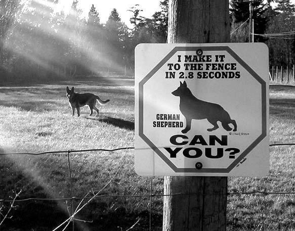 funny-Guard-dog.jpg (123 KB)