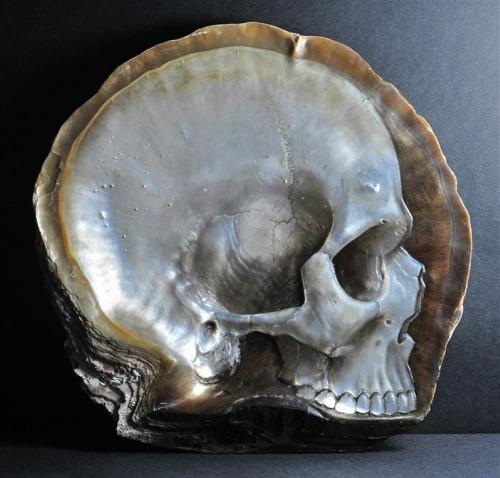 skullshell.jpg (64 KB)