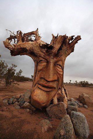 TREE-01.jpg (38 KB)