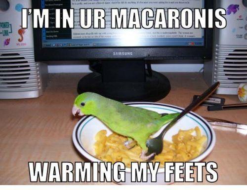 feets.jpg (57 KB)