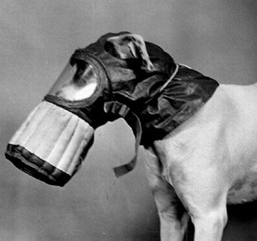 dog_gas_masks_12.jpg (29 KB)