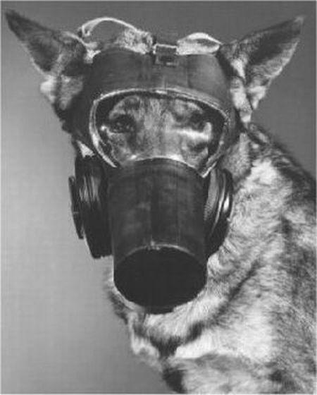 dog_gas_masks_18.jpg (31 KB)