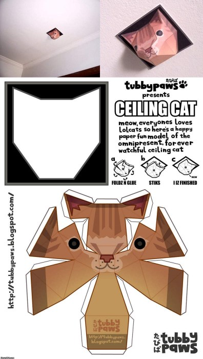 cat.jpg (338 KB)