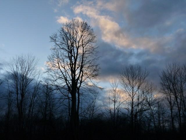 basswood_sky-before.jpg (334 KB)