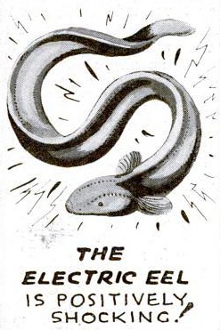 eel.jpg (60 KB)