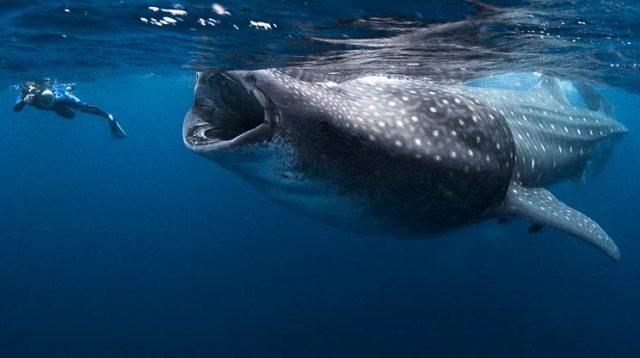 whale-gulp.jpg (39 KB)