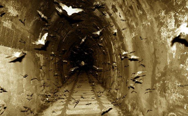 bat-tunnel.jpg (322 KB)