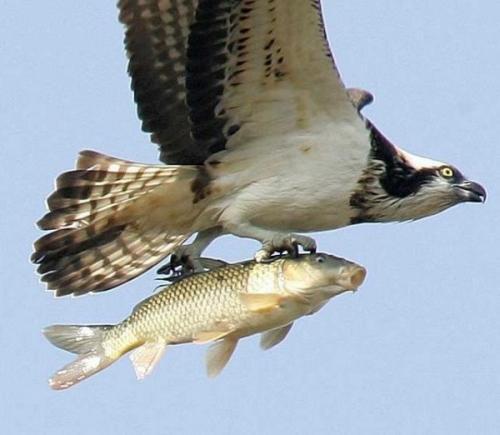 flyingfish.jpg (61 KB)
