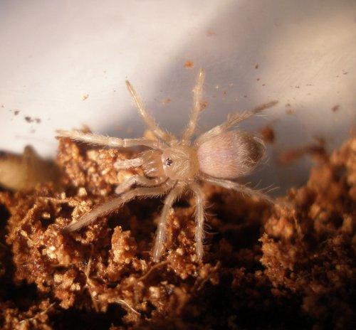 spiderpic1.jpg (1020 KB)