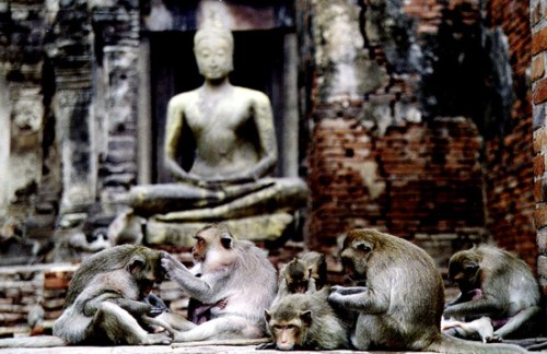 Lopburi-Monkeys1.jpg (122 KB)
