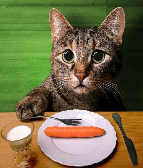 f-No-Like-Carrots-6053.jpg (67 KB)