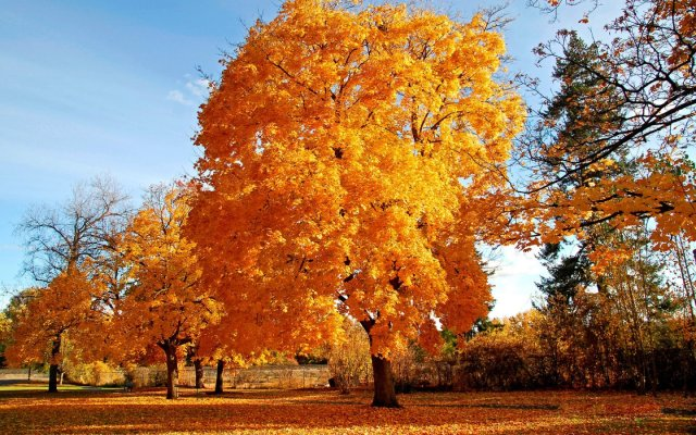 autumn.jpg (489 KB)