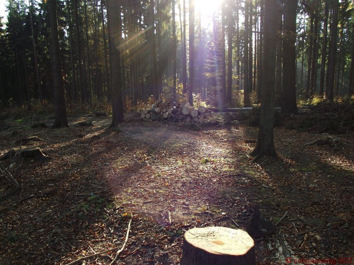 forest2.JPG (832 KB)