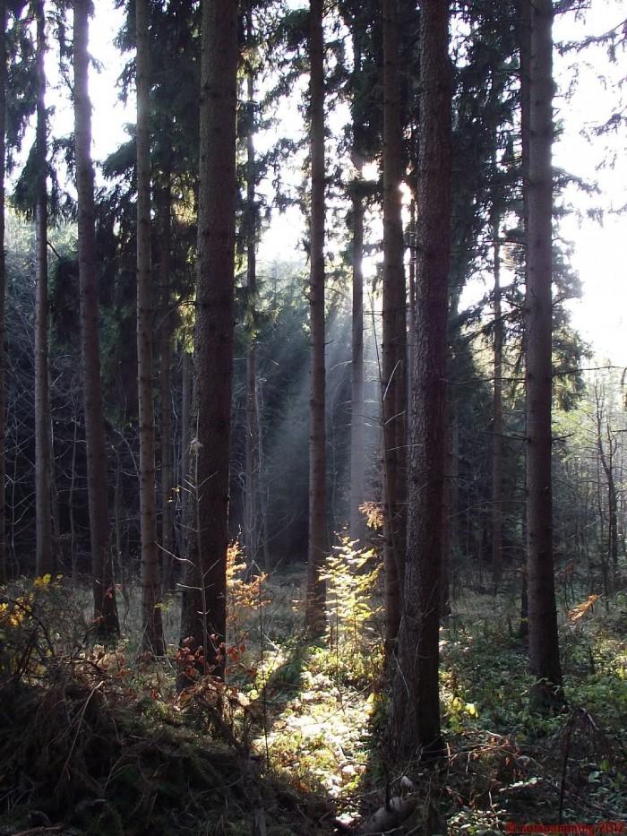 forest4.JPG (413 KB)