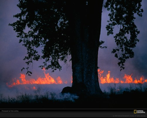 wildfire-burns-lanting-697719-xl.jpg (341 KB)